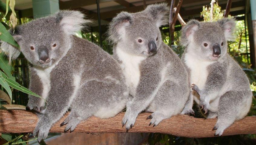 Australia Zoo - Queensland Backpackers