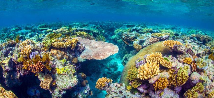 Great Barrier Reef-queensland backpackers