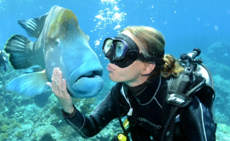 Scuba Dive Queensland backpackers