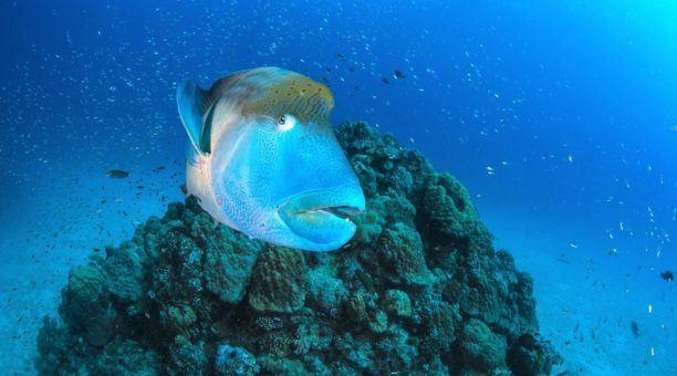 Great Barrier Reef, Rafting and Kuranda