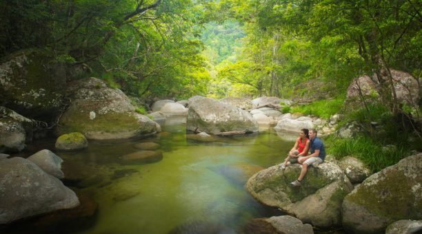 Experience the oldest Rainforest on the planet, Daintree Rainforest
