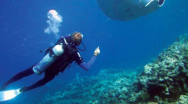 Witness majestic sealife such as Mantarays!