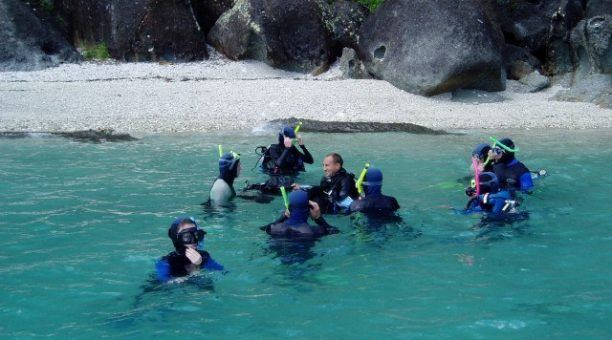 Snorkel or Dive straight off the beach!