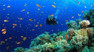Great Barrier Reef school of fish